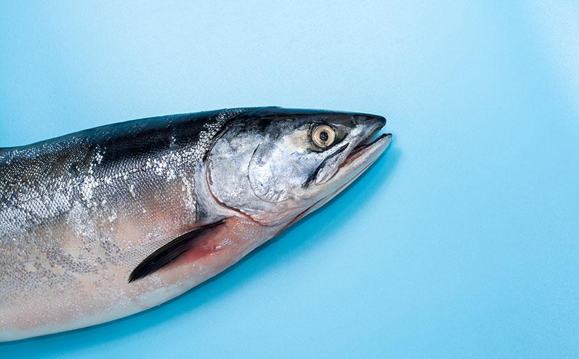 como baixar o colesterol - peixe